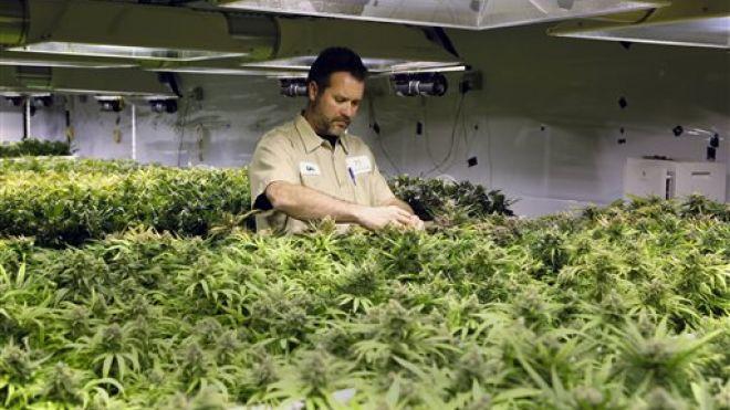 Colorado Pot Sales 2