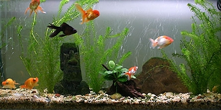 What trait is shared by the american corporate elite and for Aquarium decoration for goldfish